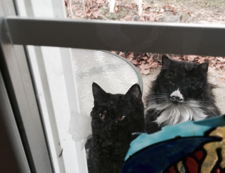 twocats_notmine