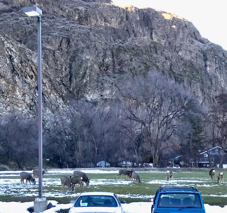 deer_in_park