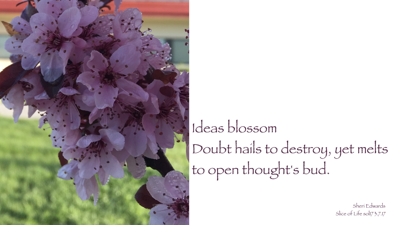 haiku sol17 blossoms hail.001.jpeg