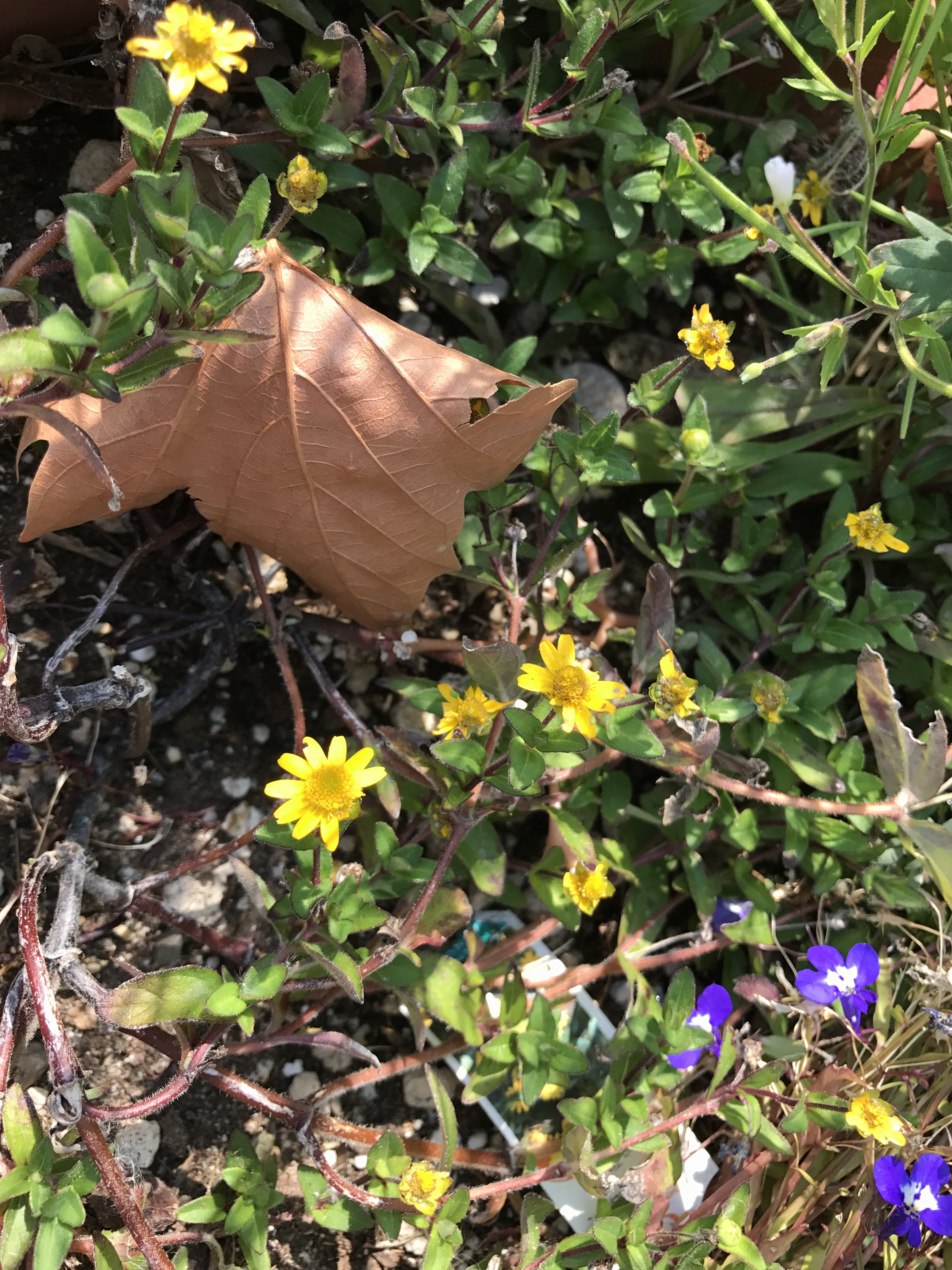 smallflowers2.JPG