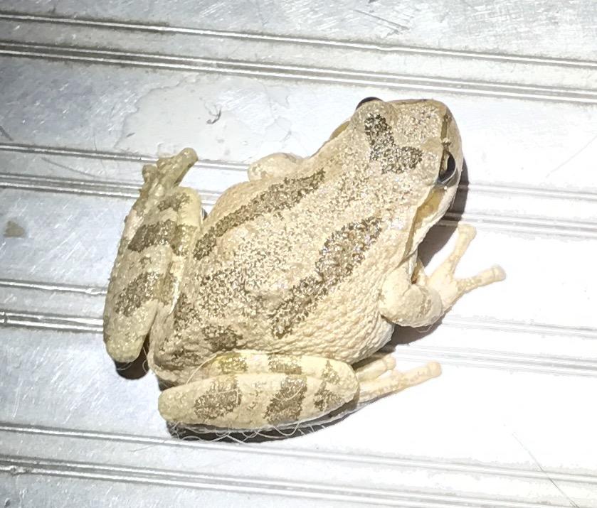 toads.jpg