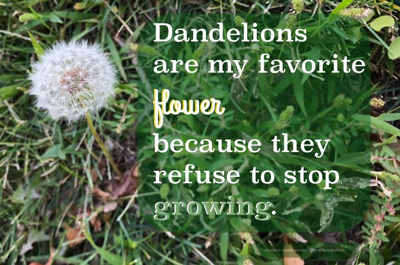 dandelions_refuse-001.jpeg