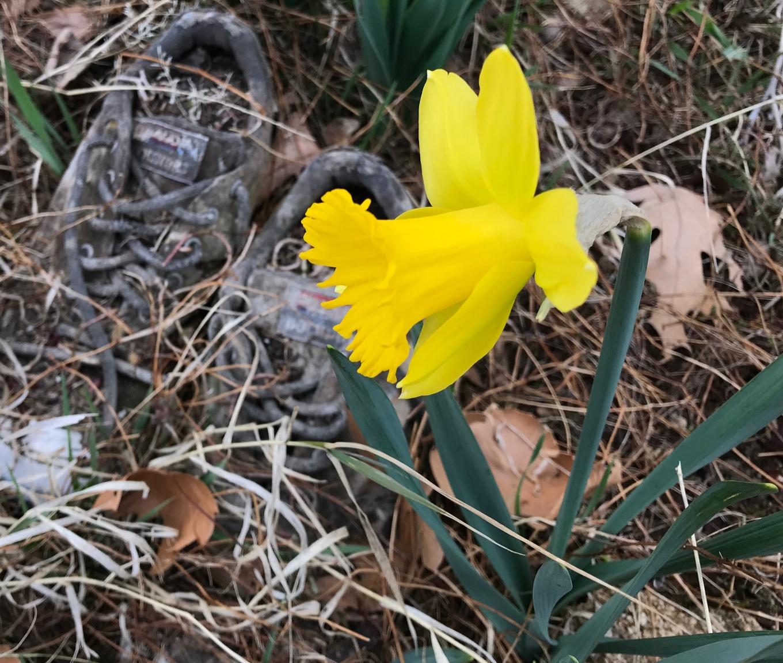 IMG_1543_daffodil_shoes.jpg