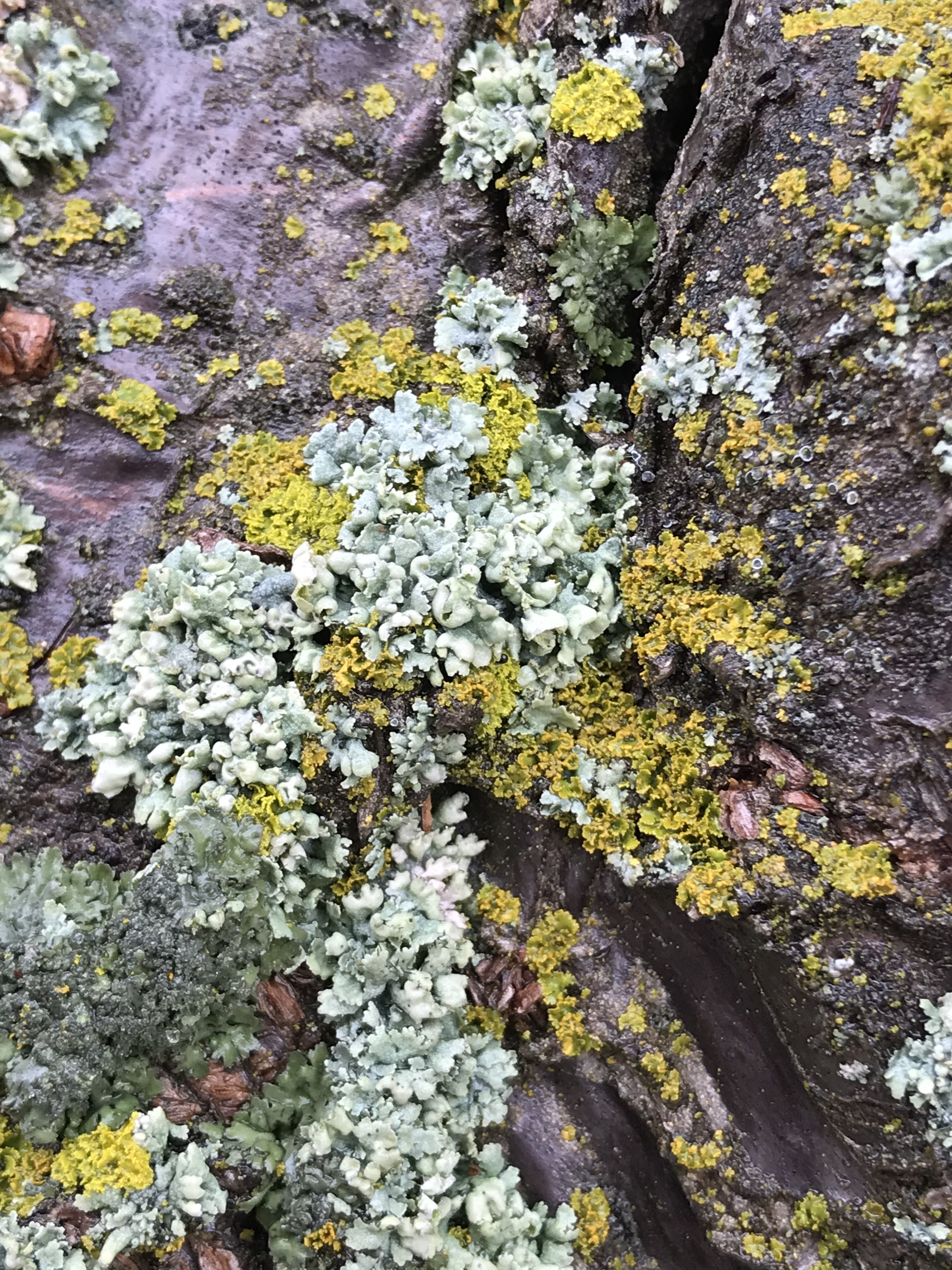 IMG_1675_lichens.jpg
