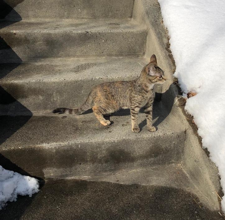 kittyoutside