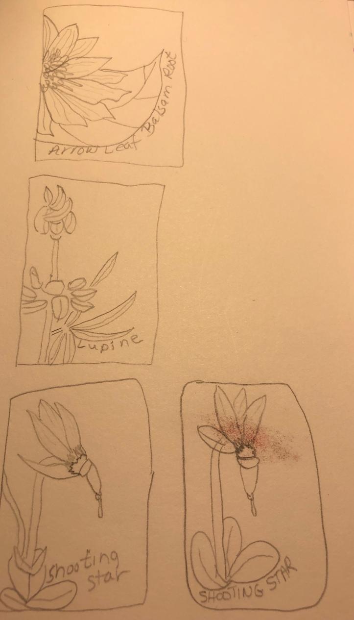 stamp.sketch.jpg