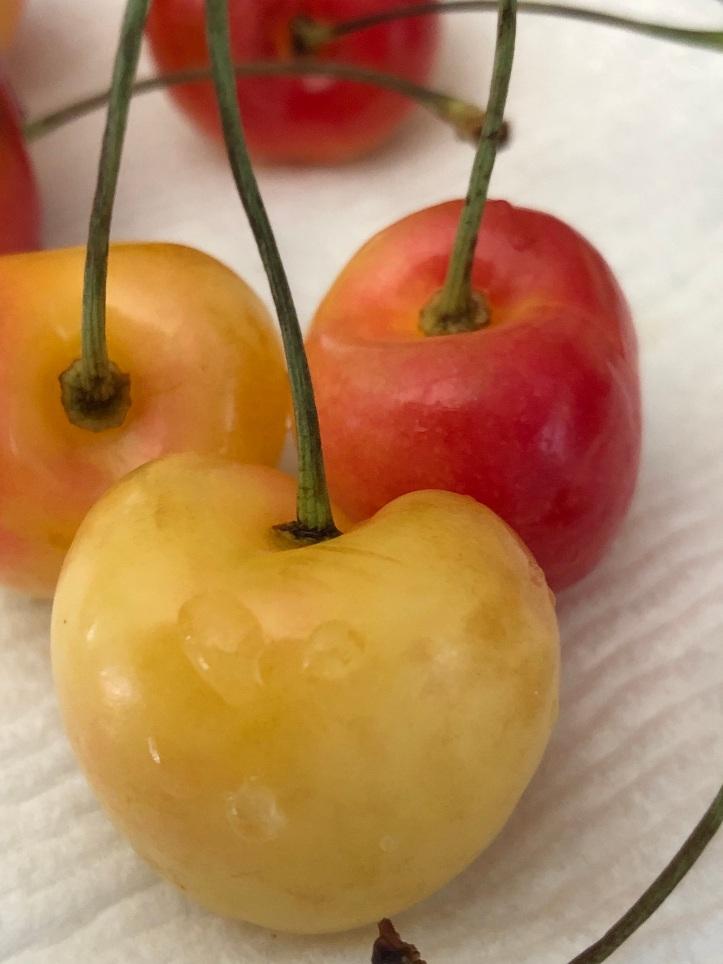IMG_0532 cherry