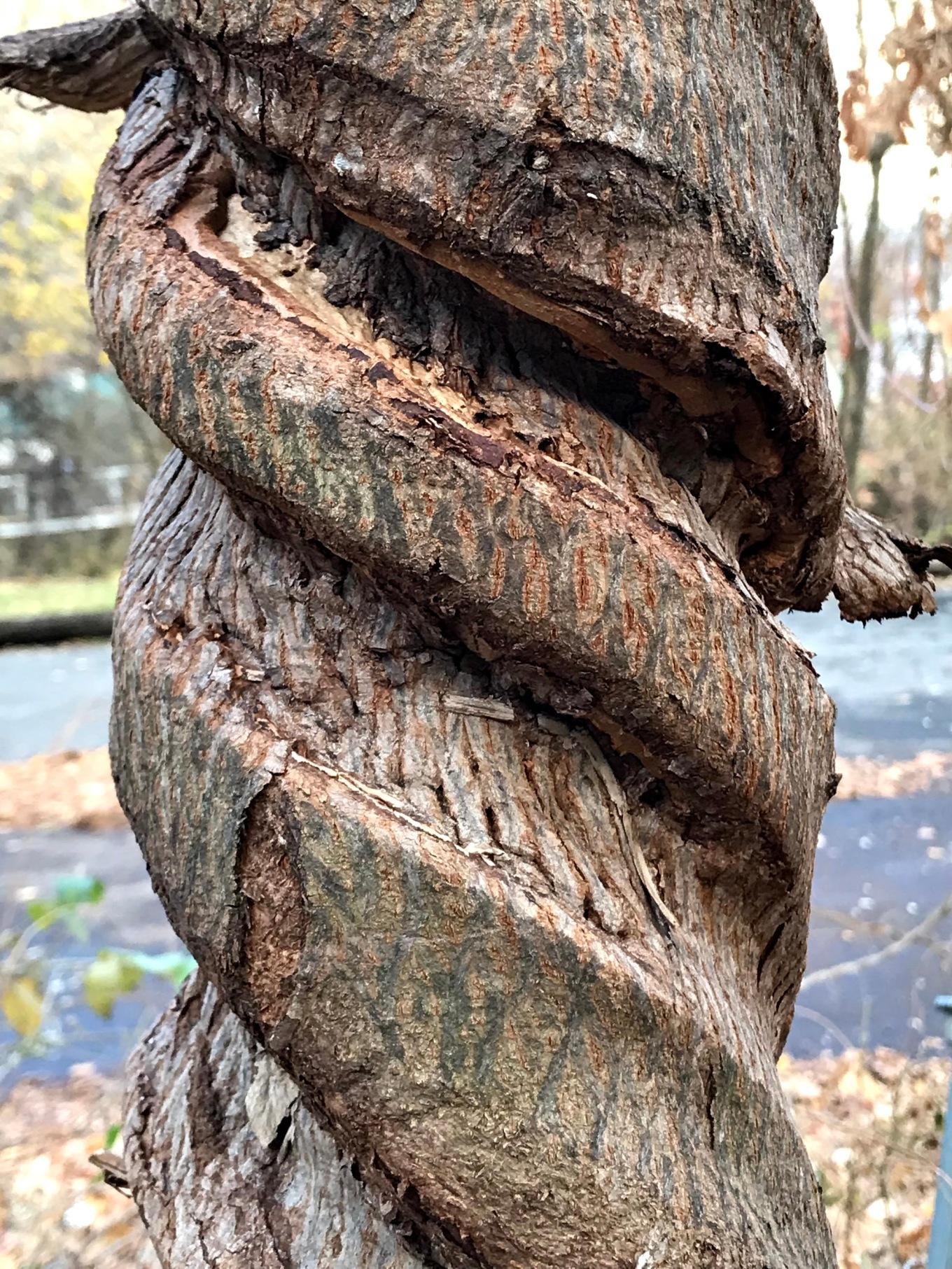 IMG_0002.tree.sculpture.jpg