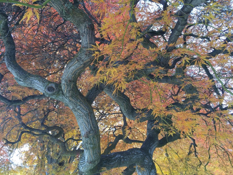 IMG_1460.tree.japanese.sculpture