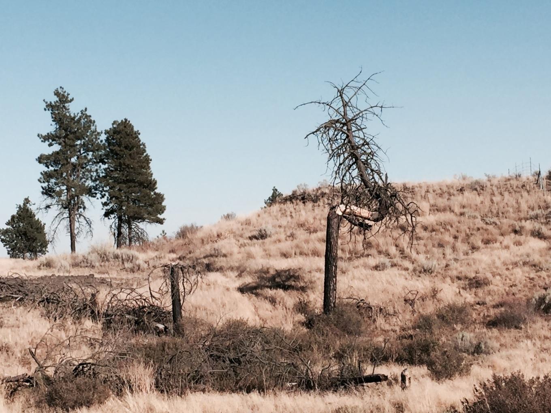 IMG_4389.tree.turns.sculpture.JPG
