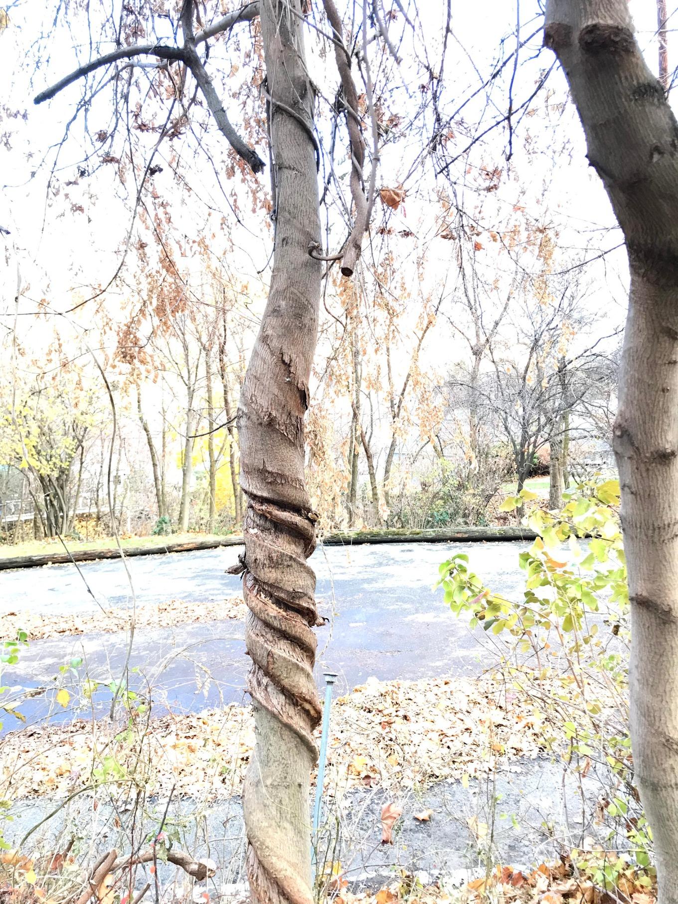 IMG_9998.tree.sculpture1.jpg