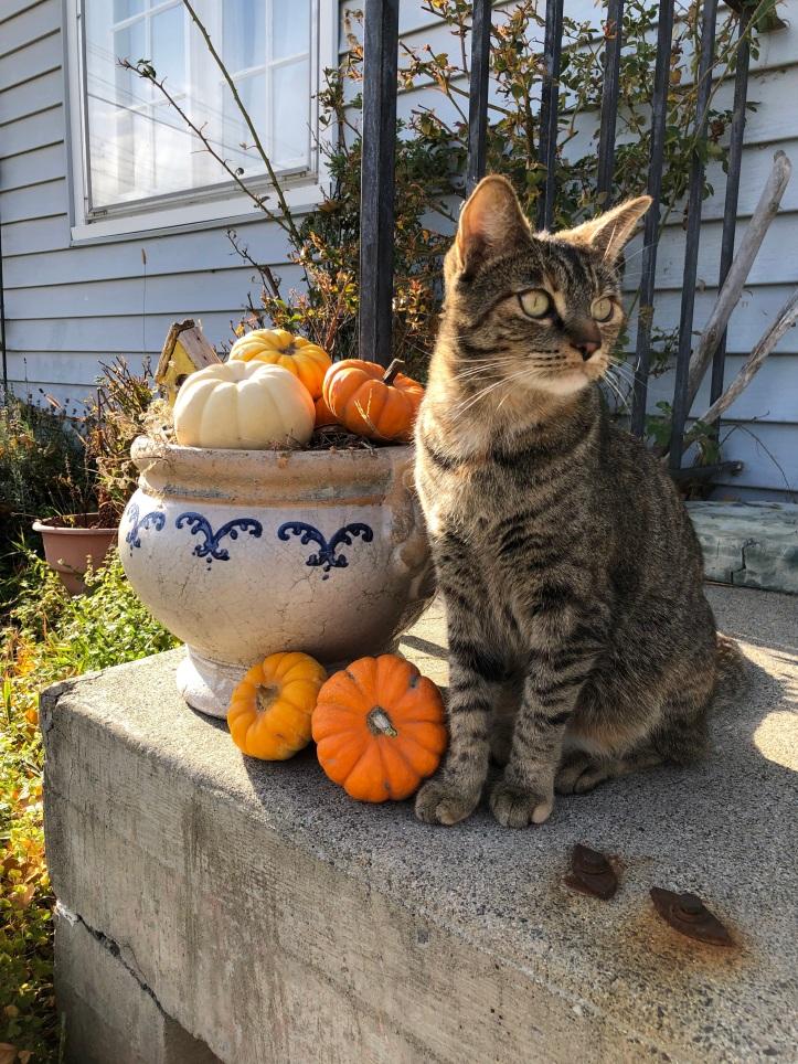 brightonconcrete.pumpkin.jpg