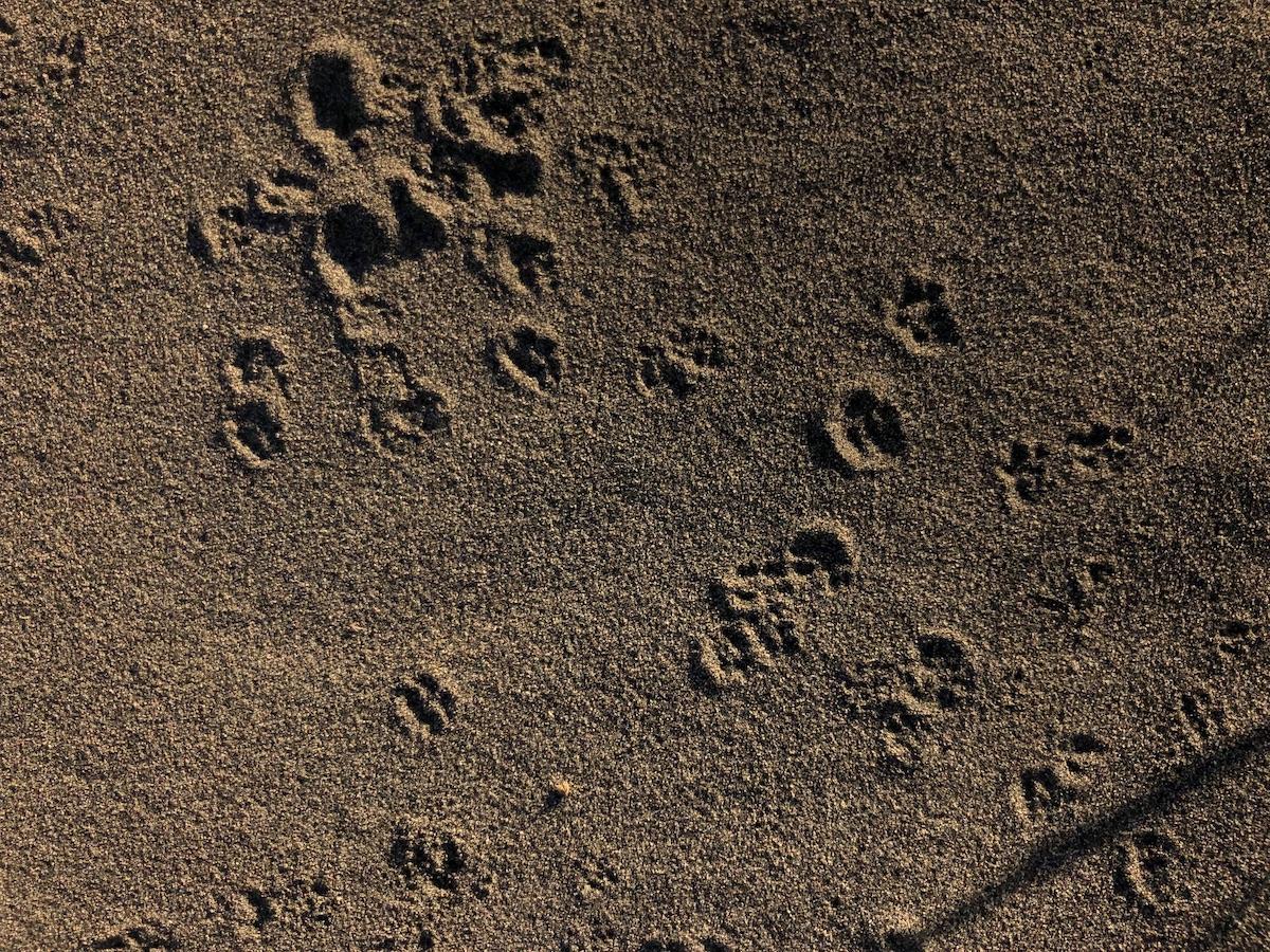 tinyfootprints sm.jpg