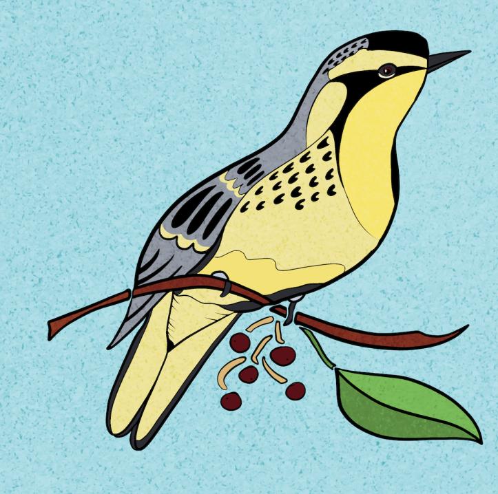 yellowthroat.warbler.screen.sm