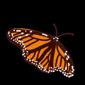 monarchbutterflyfade