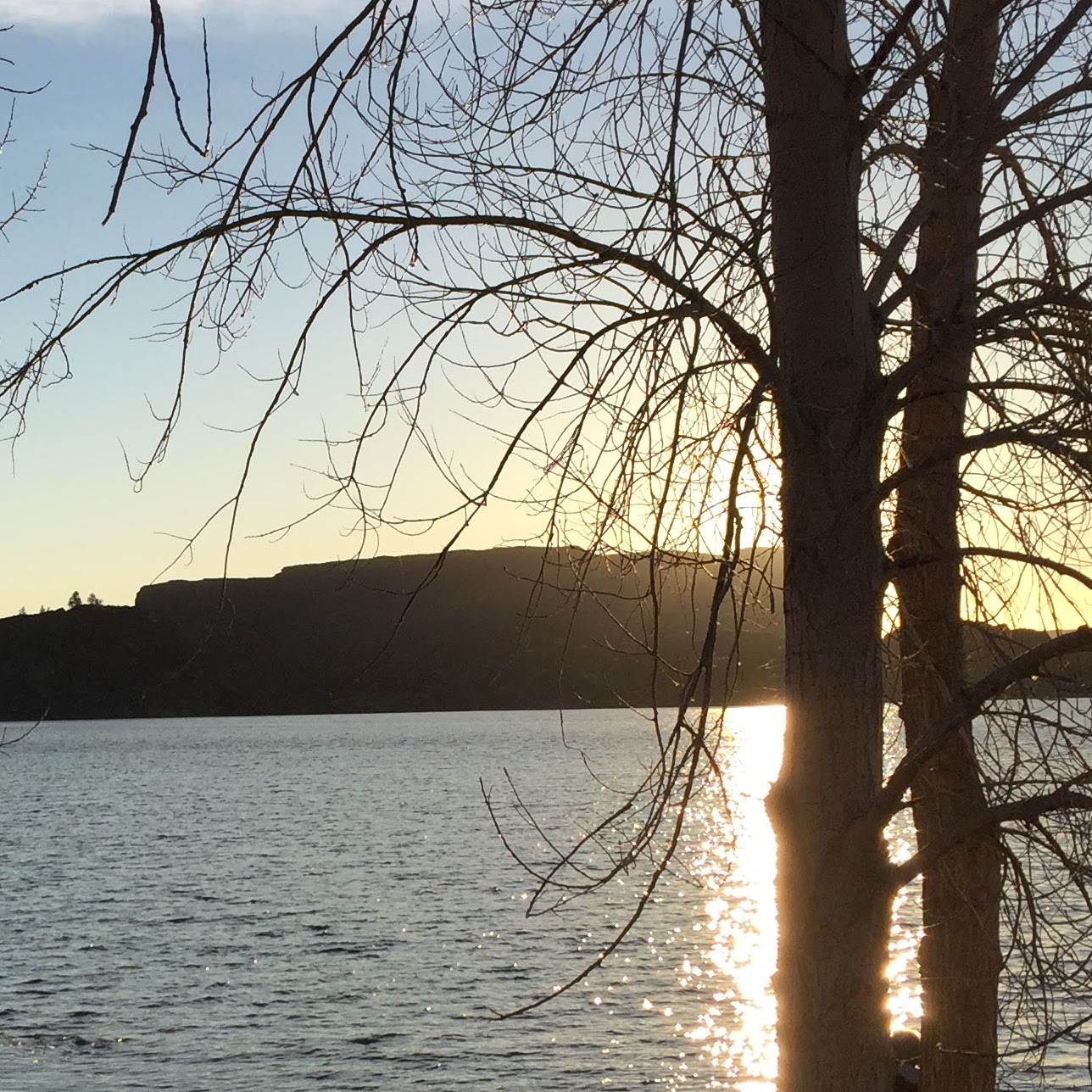 water.sun.tree