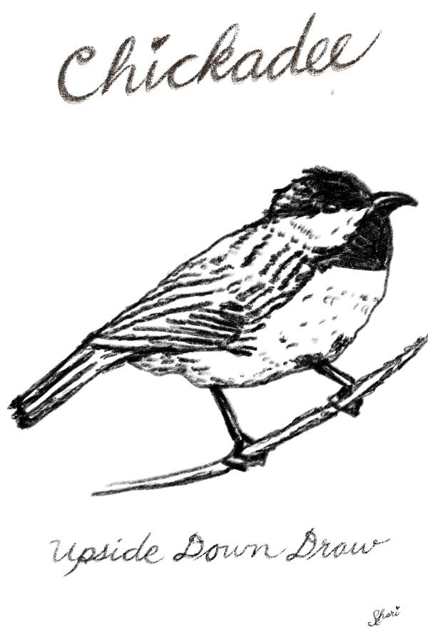 Chickadee_Upside_Down_Draw 2
